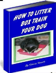 litter box train dog